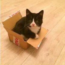 Kitten Missing Phibsboro Dublin 7